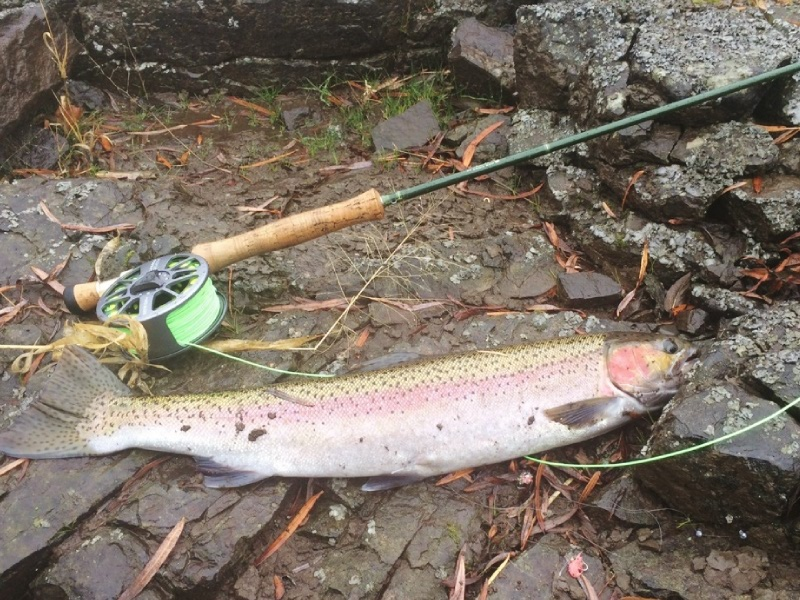guide fly fishing for steelhead
