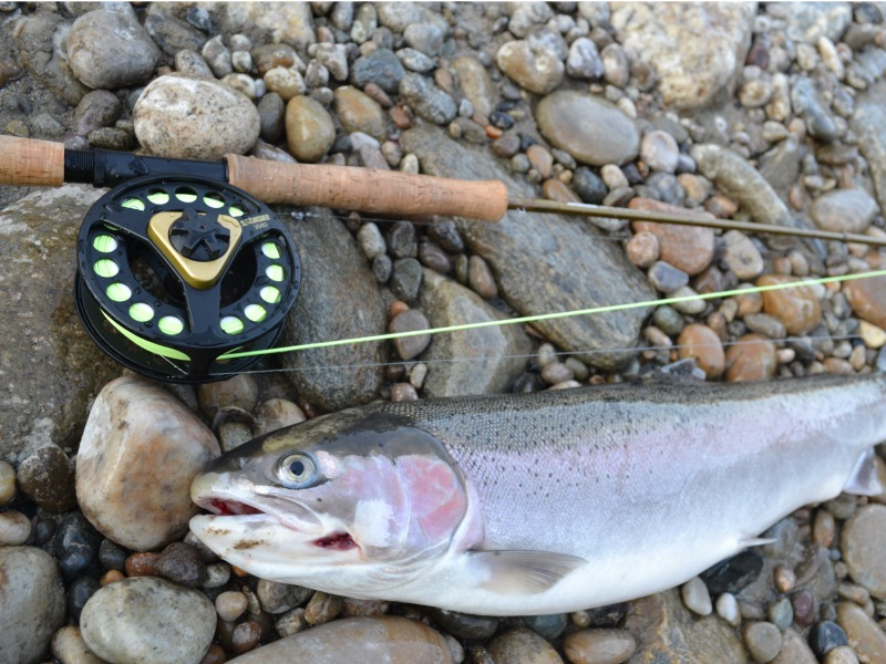 fly fishing steelhead and cutthroat trout salmon river wilderness, Fly Fishing Bait