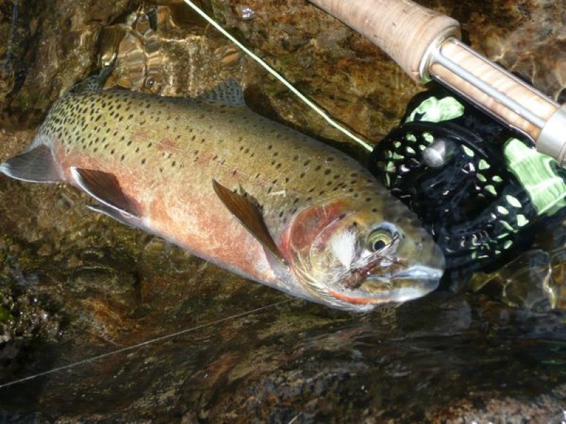cutthroat fly fishing Salmon River wilderness